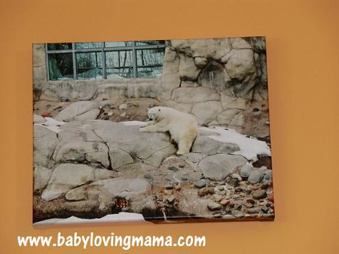 Canvas Press Polar Bear 1