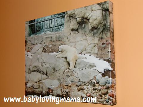 Canvas Press Polar Bear 2