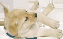 Cottonelle Puppy