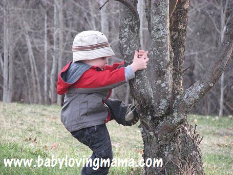 Warren Climbing Tree 2