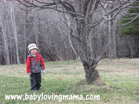 Warren Climbing Tree 3