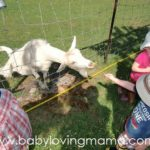 Wordless Wednesday – A Day on the Farm