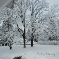 Wordless Wednesday – Winter Wonderland