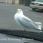 Wordless Wednesday – Seagull Stalker