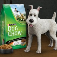 Purina Dog Photo Sweepstakes and The Adventures of Tintin {Giveaway} CLOSED