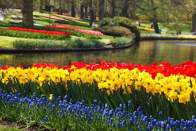 Colorful Flowers bulbs
