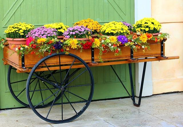 Mums in Flower Cart