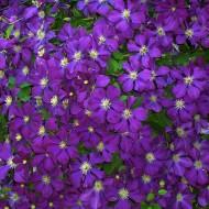 How to Create a Balanced Mixed Flower Garden Border