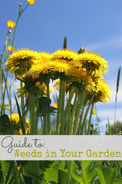 Guide to Weeds in Your Garden