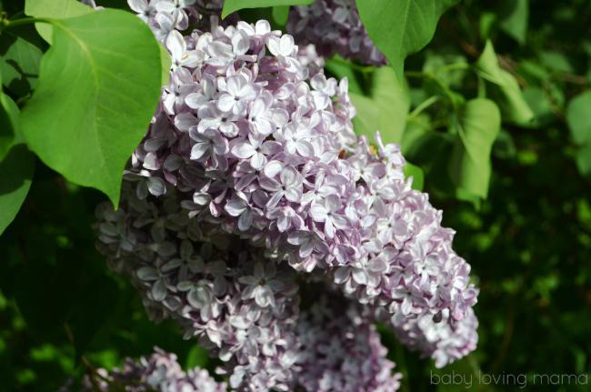 Zyrtec Allergy Face Lilacs