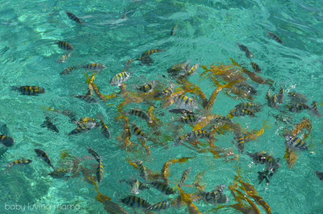 Disney Dream Castaway Cay Feeding Fish Glass Bottom Boat Tour