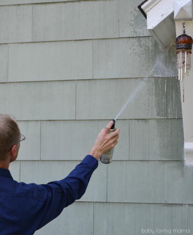 Hot Shot Wasp Spraying Nest