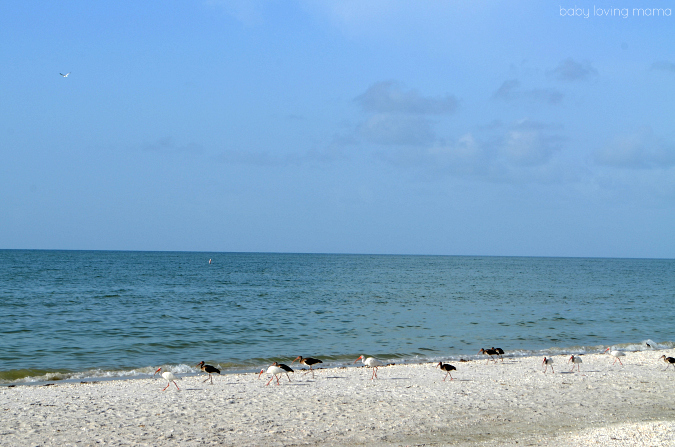 Birds of Sanibel FL at Casa Ybel