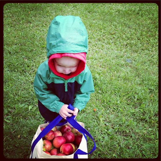 Wesley Picking Apples