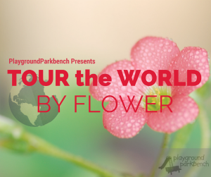 PGPB Tour the World by Flower Small