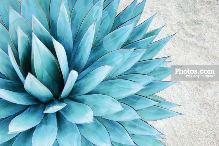 Photos com Blue Agave Print