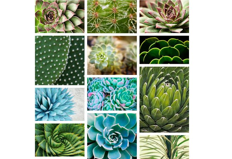 Succulents on Photos com