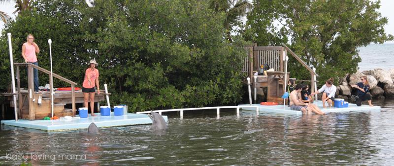 Dolphin Research Center Florida_16
