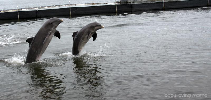 Dolphin Research Center Florida_18