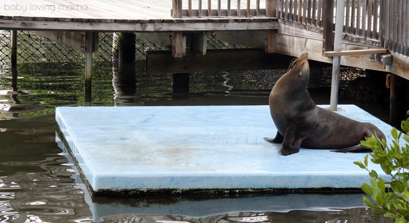 Dolphin Research Center Florida_20