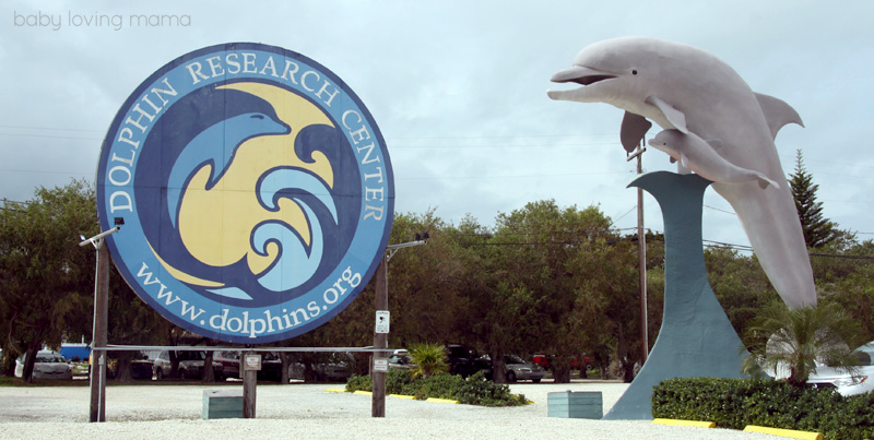 Dolphin Research Center Florida_23