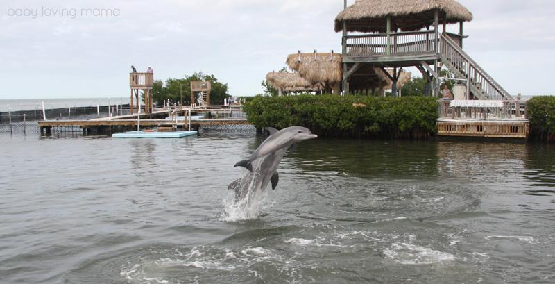 Dolphin Research Center Florida_6