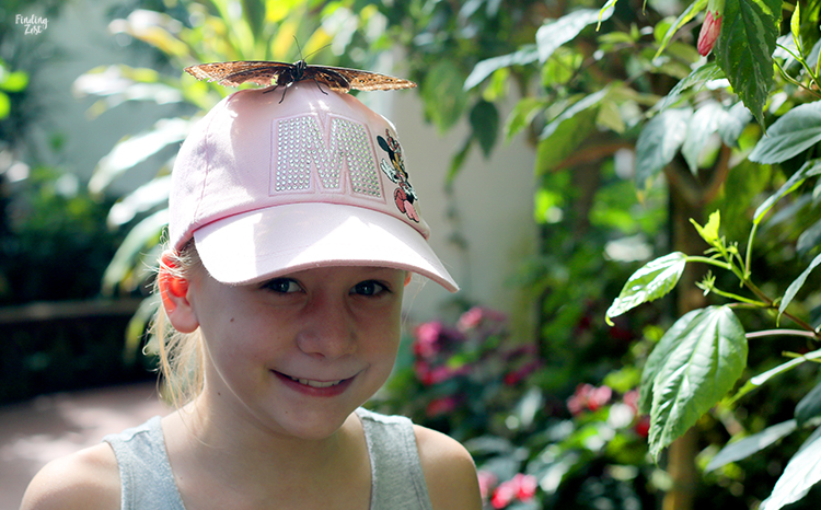 Butterfly on a girl's hat at Key West Butterfly Nature Conservatory