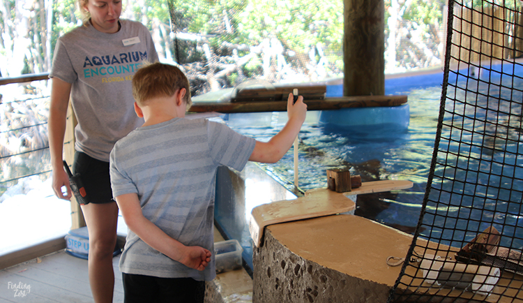 Boy feeding a shark at Aquarium Encounters Florida Keys