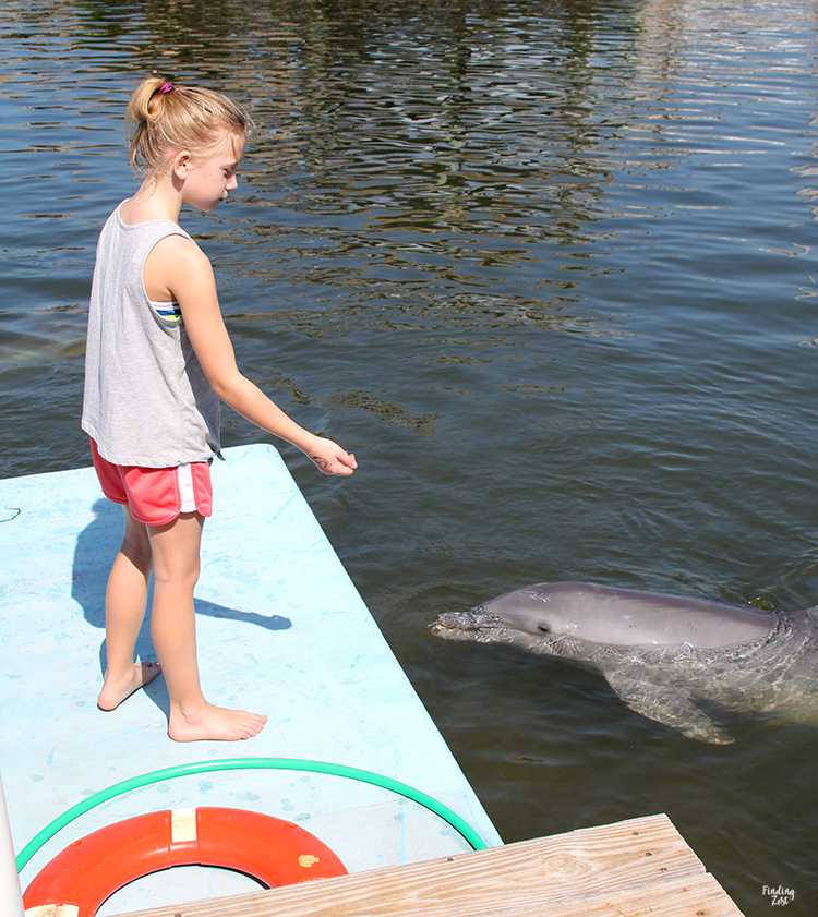 Girl feeding dolphins ice at Dolphin Research Center Florida Keys