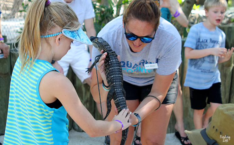Girl petting alligator at Aquarium Encounters Florida Keys