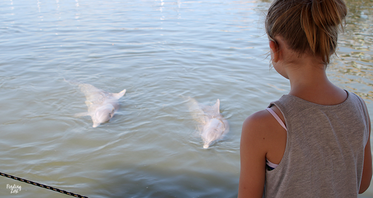 Girl watching dolphins swim at Dolphin Research Center Florida Keys