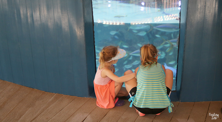 Girls watching fish at Aquarium Encounters Florida Keys