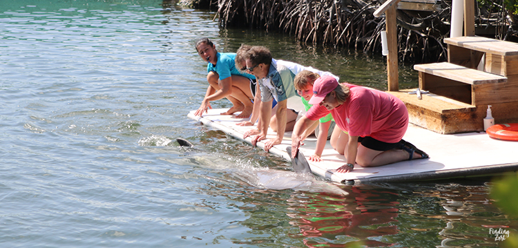 Guests at dolphin encounter at Dolphin Research Center Florida Keys