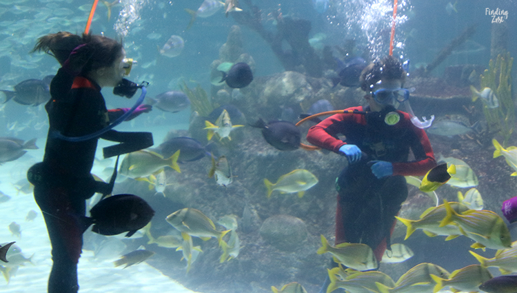 Kids diving at Aquarium Encounters Florida Keys