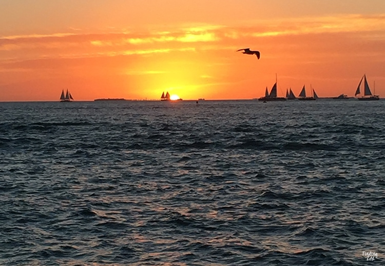 Mallory Square Sunset Celebration in Key West Florida