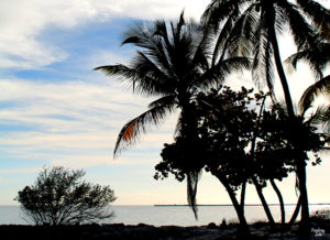 Palm Trees near the ocean at Smathers Beach Key West Florida