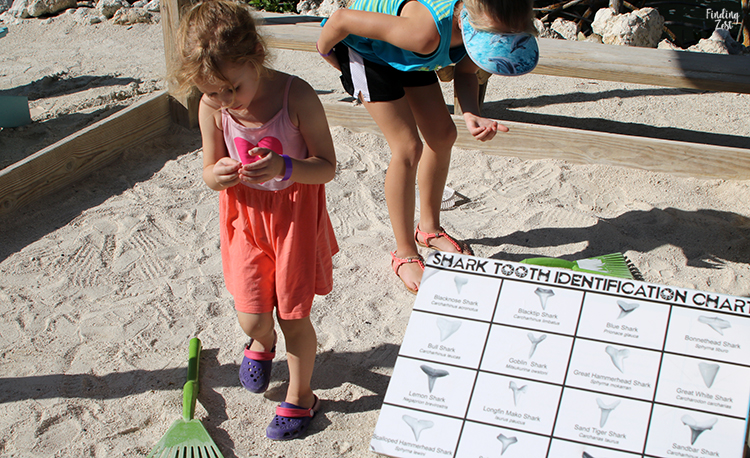 Kids searching for shark teeth at Aquarium Encounters Florida Keys