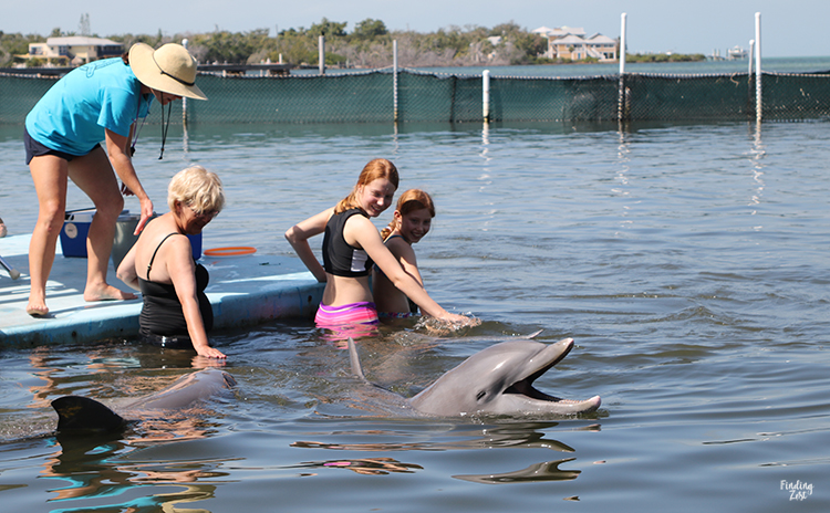 Smiling dolphins and guests swimming at encounter at Dolphin Research Center Florida Keys