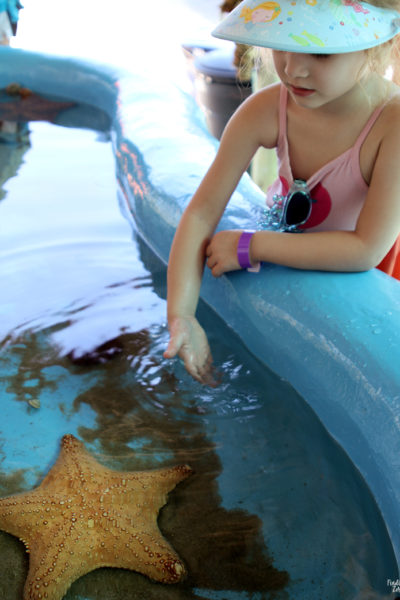 Girl and starfish touch tank at Aquarium Encounters Florida Keys
